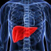 ginlava tăng cường chức năng gan